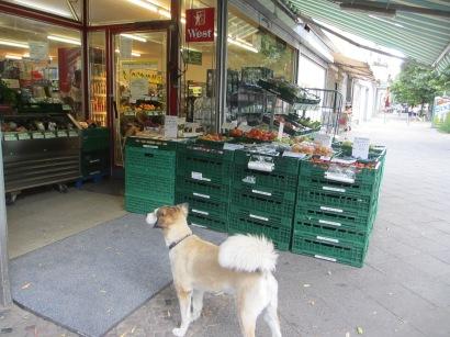 dog outside shop